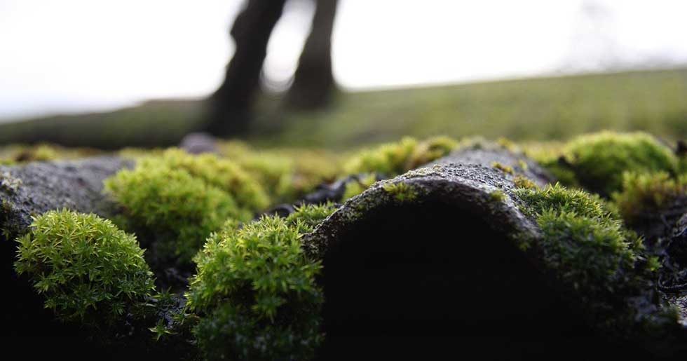How to Remove Moss from Roof with Detergent