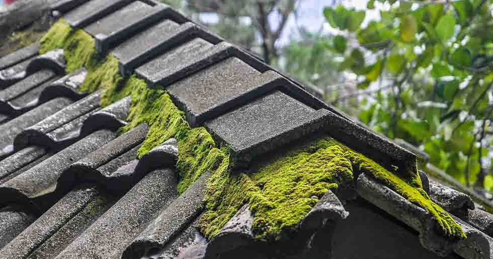 Is Moss On The Roof Harmful? Here's What You Should Know