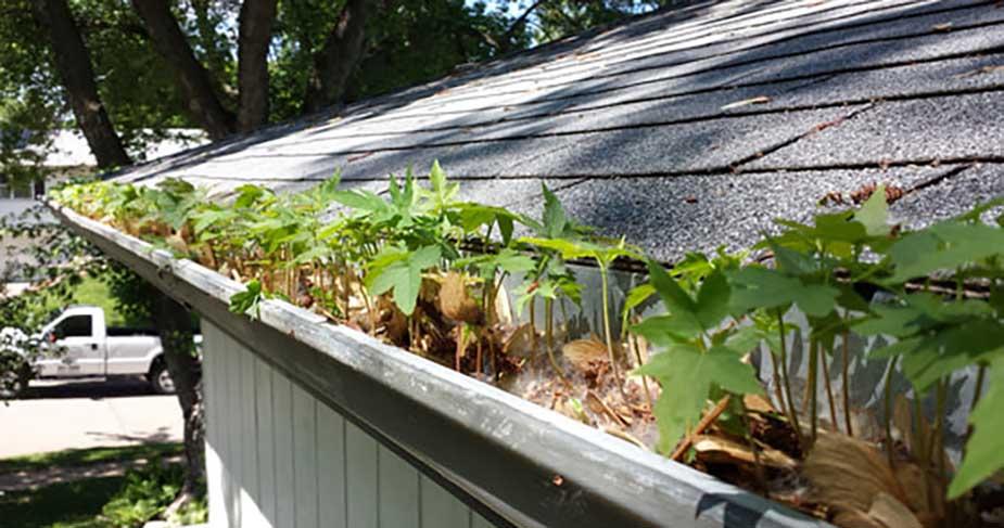 plants growing inside gutter