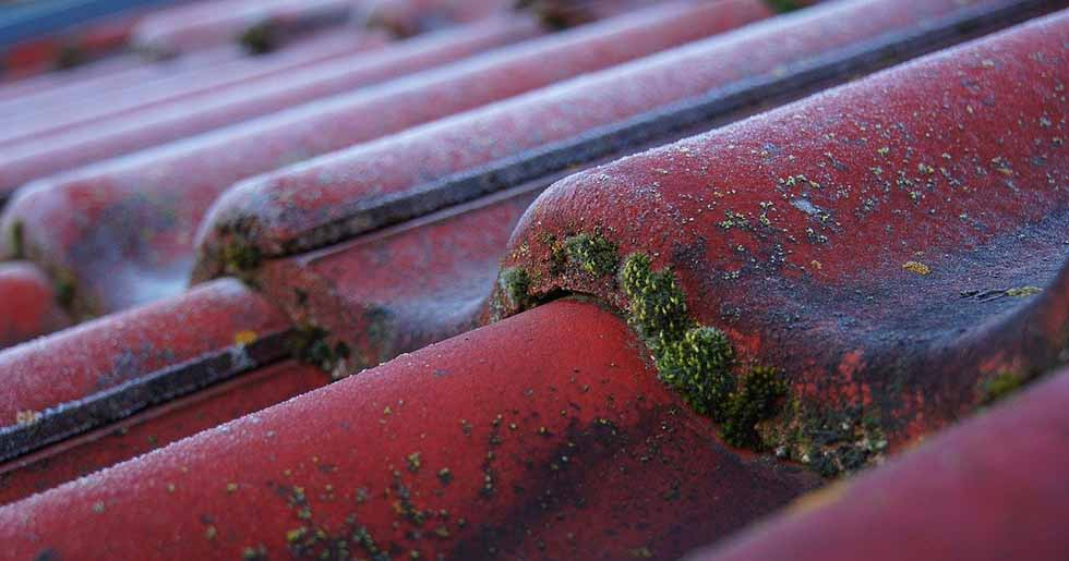 roof shingles with moss